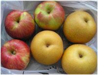 もらった梨とりんご