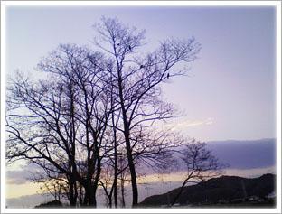 葉を落とした木々の写真 初冬ですねぇ