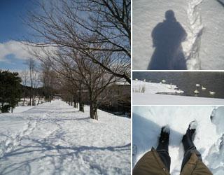 雪が積もったウォーキング用道路