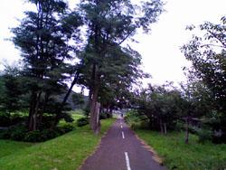 20080801road