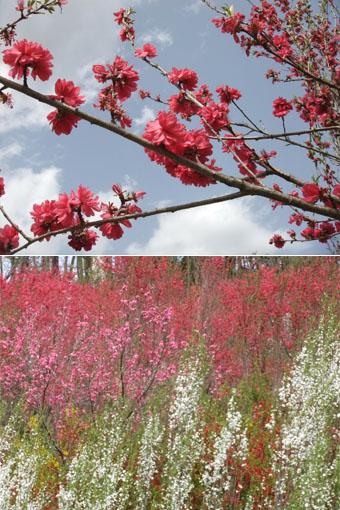 花やしき公園