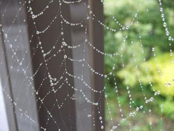しずくが付いたクモの巣