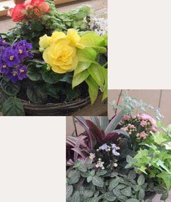 花屋さんの寄せ植え