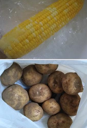 Corn_jaga