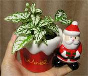 サンタクロースの鉢カバー