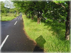 近くの歩行者専用道路