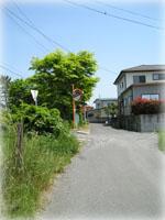 ご近所の写真
